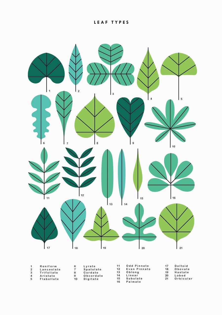 Leaf Types         Sarah Abbott