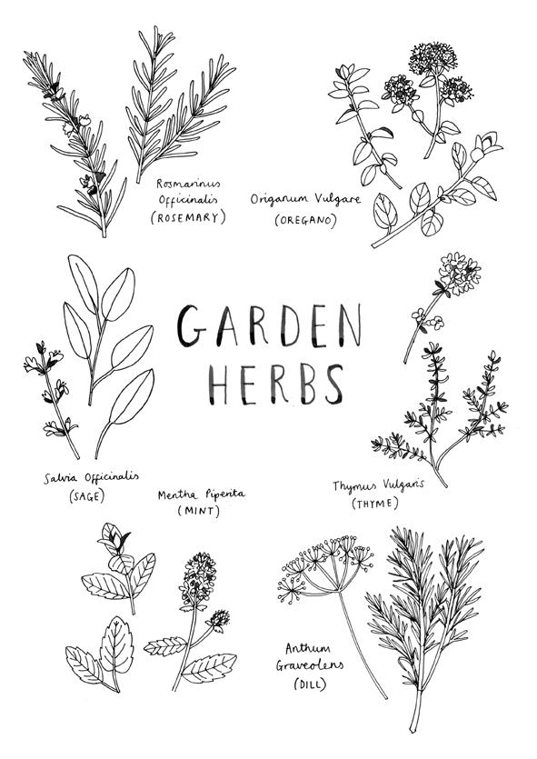 Herbs - Jenny Seddon